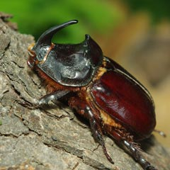 El animal más fuerte del mundo(no es la hormiga)