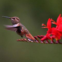 [Imagen: naturaleza_colibri_vida.jpg]