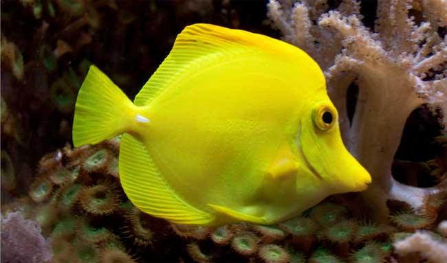 ¿Cómo respiran los peces? - Saberia