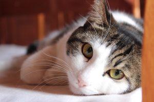 Cómo cuidar de tu gato