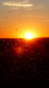 ¿Por qué los insectos van a la luz?