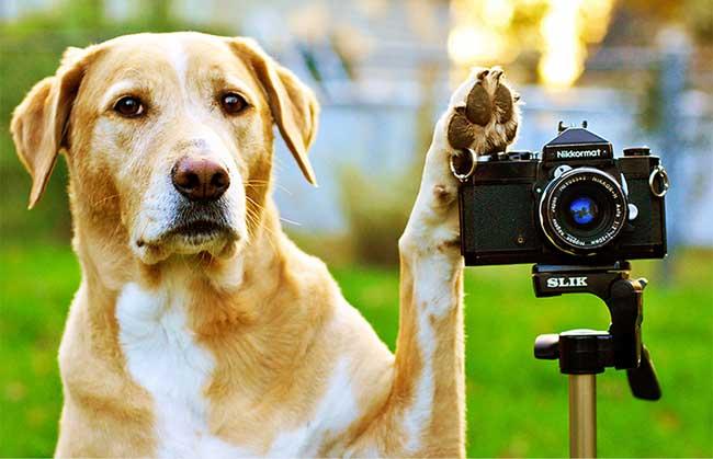 fotos-perros